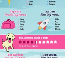 2016-dog-names-infographic