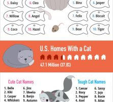 2018-top-cat-names-2
