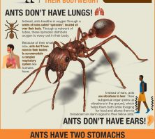 Ants-All-You-Need-To-Know-Aurora-Pest-Control-Pros