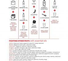 DIY-Pest-Control-Methods-Kalamazoo-Pest-Control-Pros