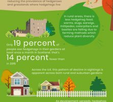 UK-Hedgehog-Decline-Infographic