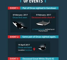 orcas-hunt-great-whites-infographic-galleryr