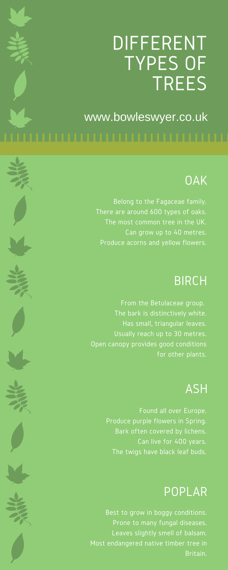 types-of-trees-infographic-galleryr