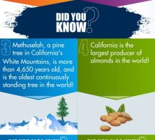 Eureka-The-Golden-State-Trivia-Infographic-galleryr