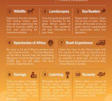 Ten Reasons to Go on an African Safari