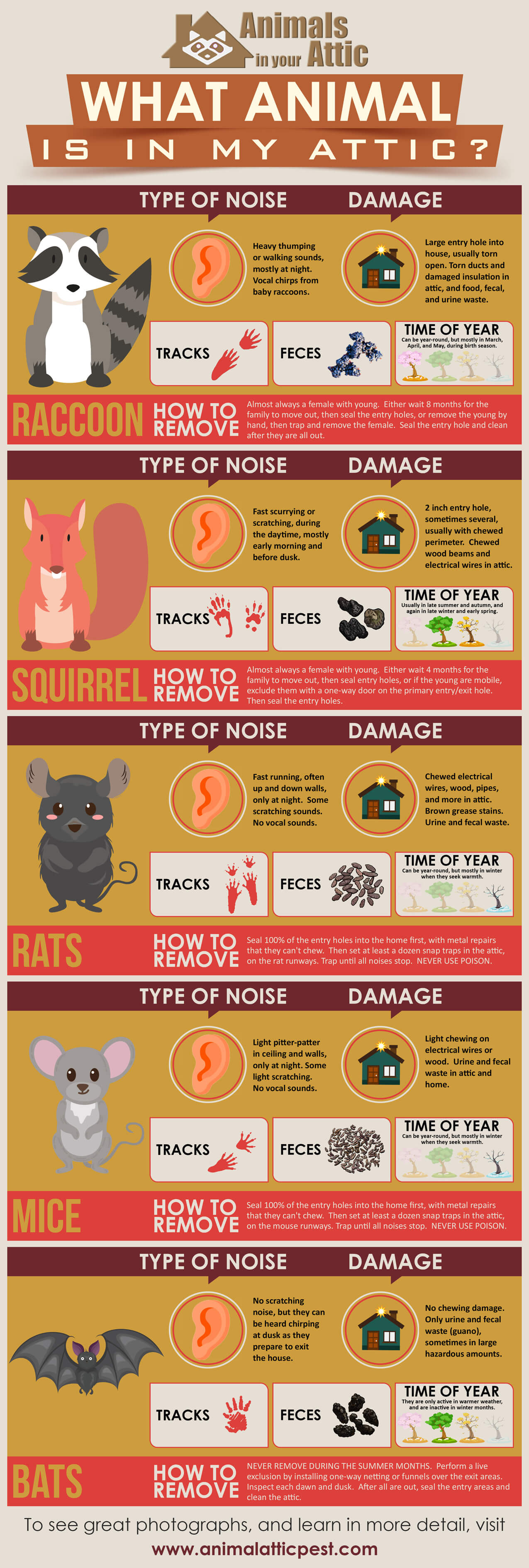 WHAT_ANIMAL_IS_IN_MY_ATTIC_infographic