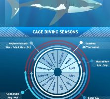 great-white-shark-infographic-galleryr