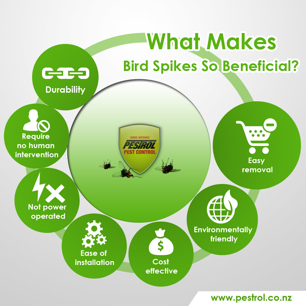 what-makes-bird-spikes-so-beneficial